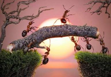 formiche-a-lavoro