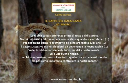 il gatto del dalai lama3