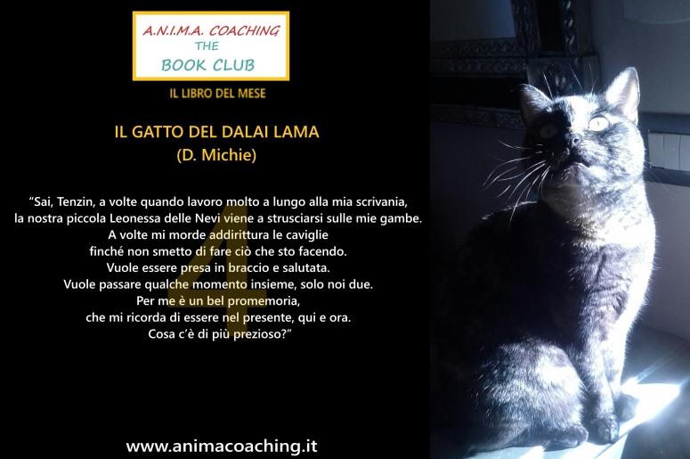 il gatto del dalai lama4